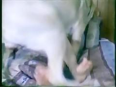 dog cum cup - Sexo con Animales