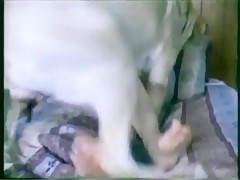 pitbul knot - Sexo con Animales - Portalzoo->