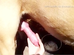 Doggy Fun Outdoor