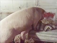 fucking fat - Sexo con Animales - Portalzoo->